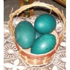 Emu Egg Shells